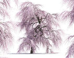 Sakura Tree 3D outdoors
