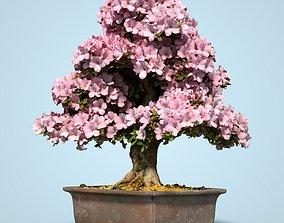 3D asset realtime Satsuki Bonsai Tree Blossom 14