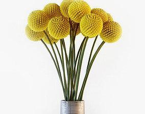 aroma Craspedia flowers in vase 3D model