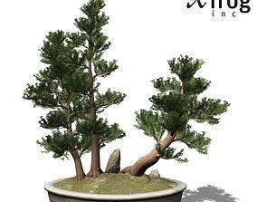 XfrogPlants Western Juniper - Bonsai 3D model