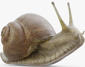 Snail Rigged 3D model