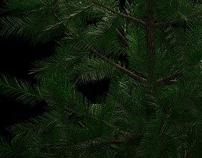 wood 3D model conifer tree