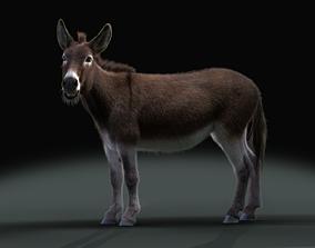 Equus asinus 3D model