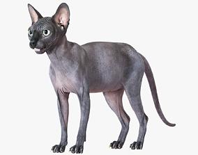 3D model Sphynx Cat Black