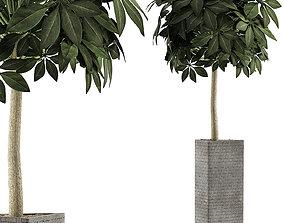 Plants Collection 46 3D