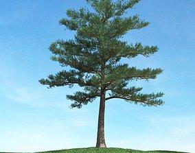 Green Tree Conifer 3D model
