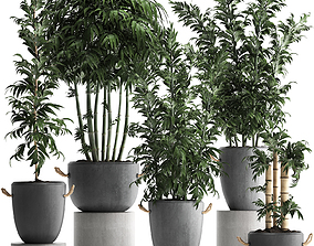 Collection of Exotic bamboo Plants 390 3D