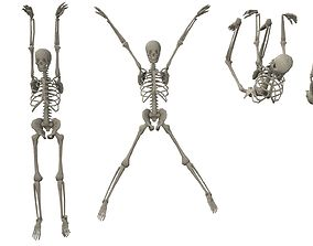 3D asset Skeleton Hanging Poses