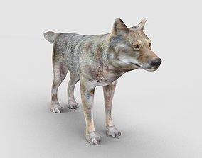 Wolf Model husky