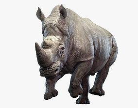 Rhino Animated 3D safari