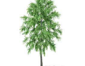 3D White Willow Salix alba 7m