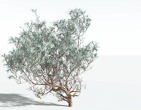 3D EVERYPlant Big Sagebrush SINGLE --1 Model--