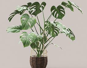 Monstera plant flora 3D model