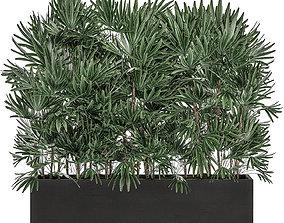 Decorative plants in a black flowerpot 515 3D model